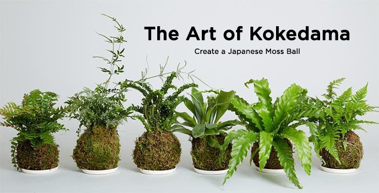 The Art of Kokedama