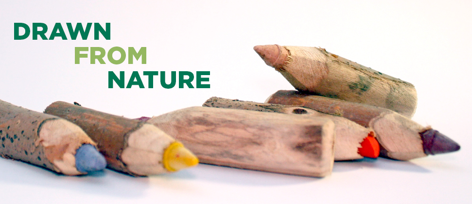 Drawn from Nature workshop banner image