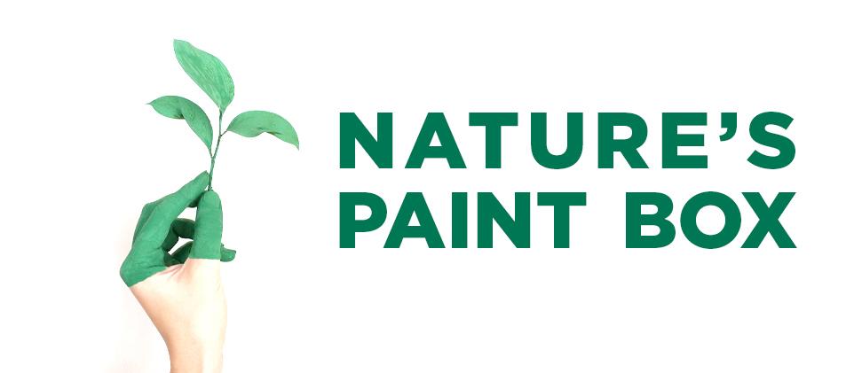 Nature's Paint Box workshop banner image