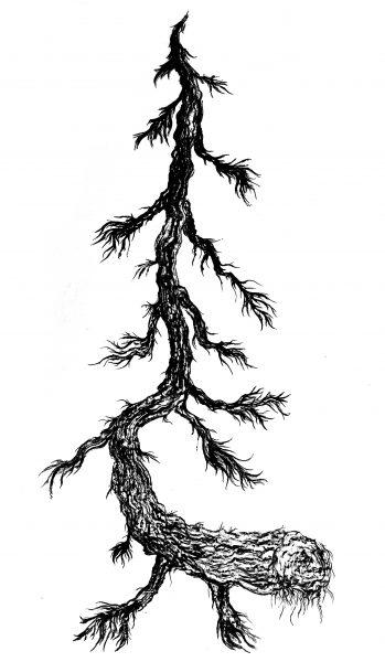 ERIKA NIVA, Balsam Spirit, 5 x 3 ft, charcoal rubbing, 2021
