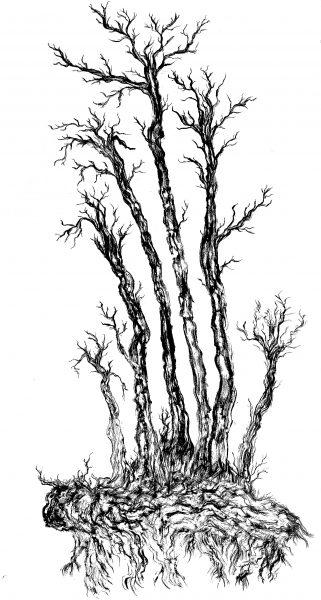 ERIKA NIVA, Poplar Spirit, 5 x 3 ft, charcoal rubbing, 2021