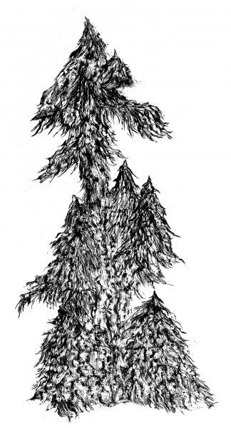 ERIKA NIVA, Spruce Spirit, 5 x 3 ft, charcoal rubbing, 2021